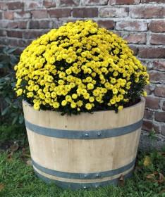 Pflanzkübel aus 1/2 gebrauchtem Weinfass natur