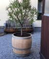 Pflanzkübel aus 3/4 gebrauchtem Weinfass natur