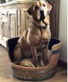 Weinfass Hundekorb aus Eichenholz